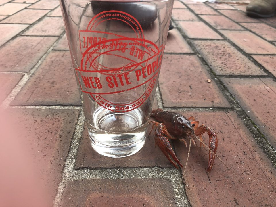 point2point Central pint glass with our crawfish friend